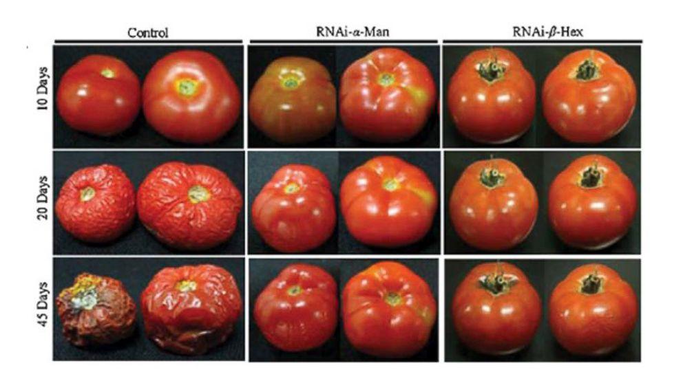 ht_tomato_progression_2_sr_140425_16x9_992